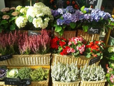 Flowers in Dublin