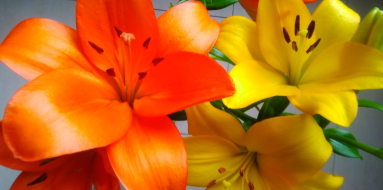 orange and yellow LA lilies